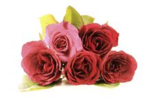 ফুলের-পিকচার-নতুন-Red-Rose-flower-photo-2021